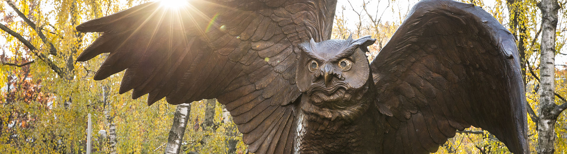 Owl statue with the sun rising behind it